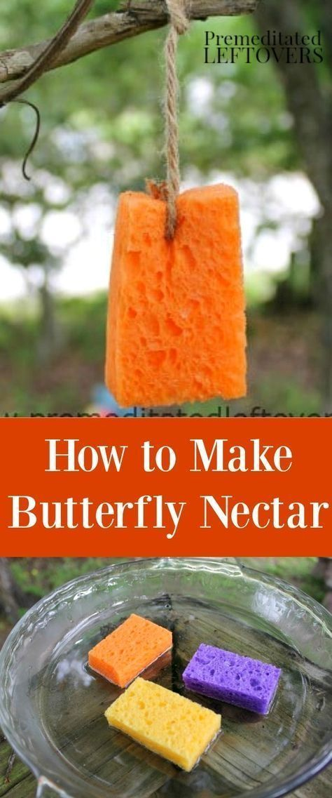 Do you want to attract butterflies to an area of your yard? Here is How to Make ...