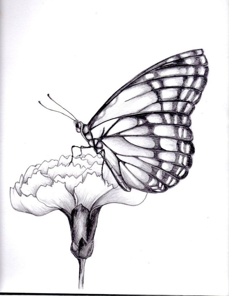 drawings of flowers and butterflies | my drawing of a butterfly. by ~kittycat727...