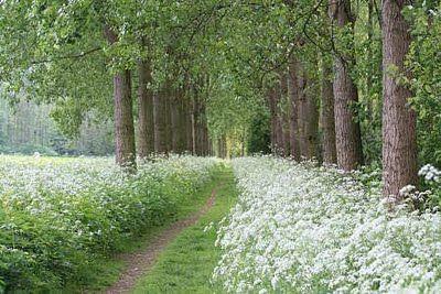 A path through Queen Ann's Lace