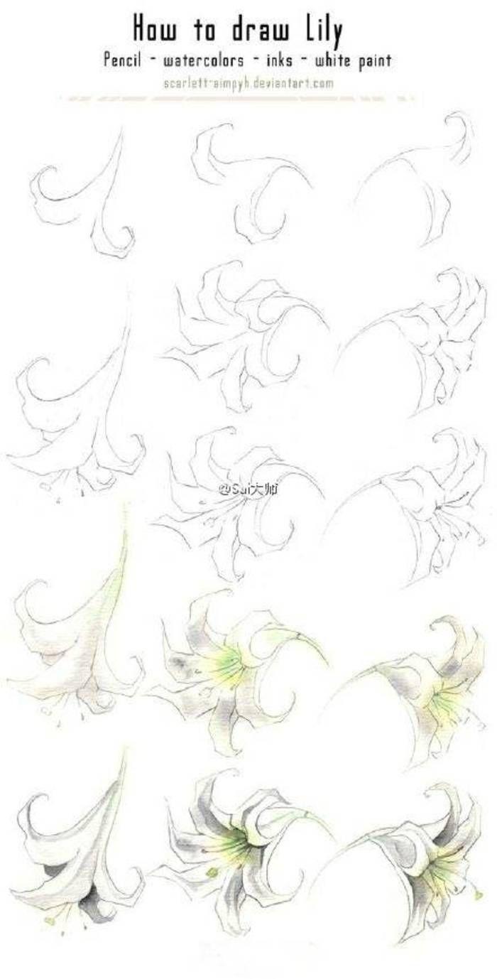 [cp]@Sai大师: #绘画学习# 玫瑰,牡丹,以及各种花卉绘制过程...