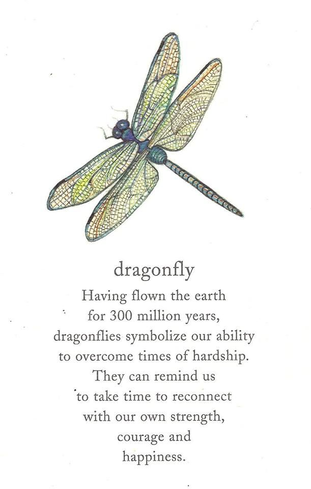This is why I call my business Devoted Dragonfly, and because they have legs but...