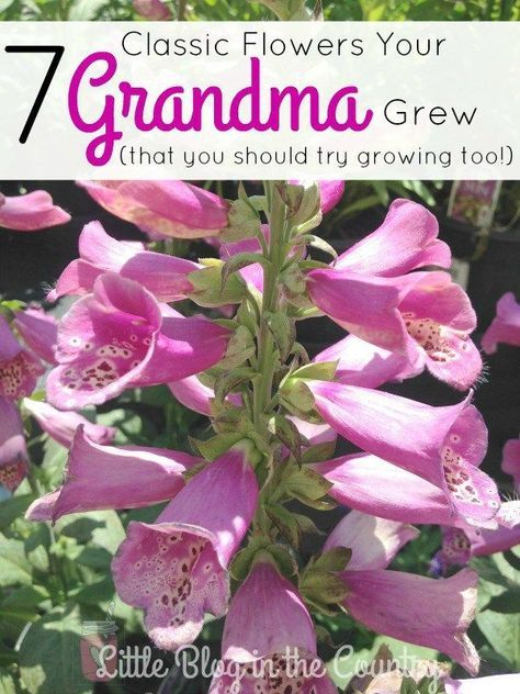 7 Flowers Your Grandma Grew are just what you need to update your garden this ye...