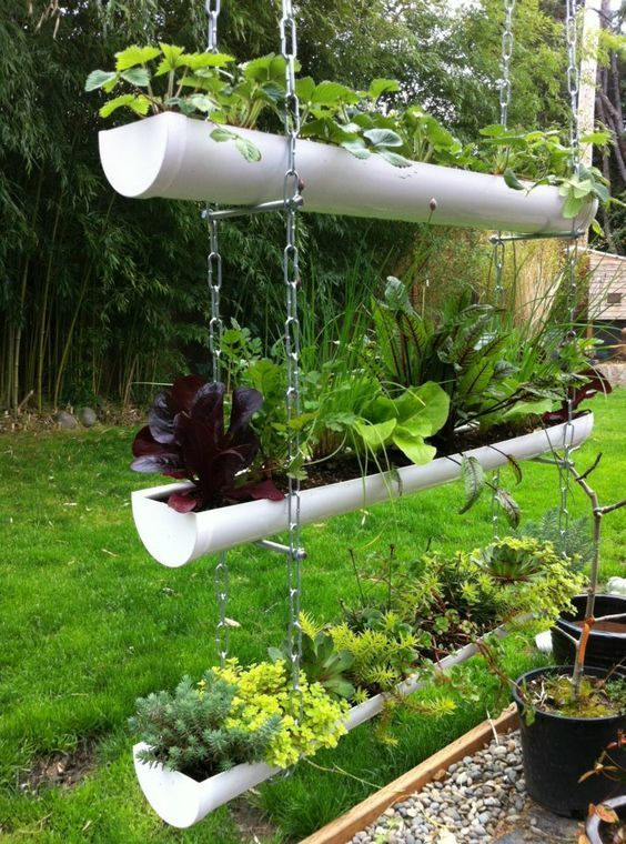 Designing and growing your herb garden in a gutter garden is fun and exciting, n...