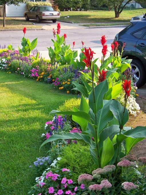 Love cannas! Colorful border with tropical looking cannas adding height, and vis...