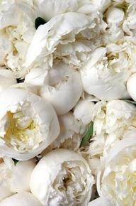 Luscious whites | www.myLusciousLif... - white blooms
