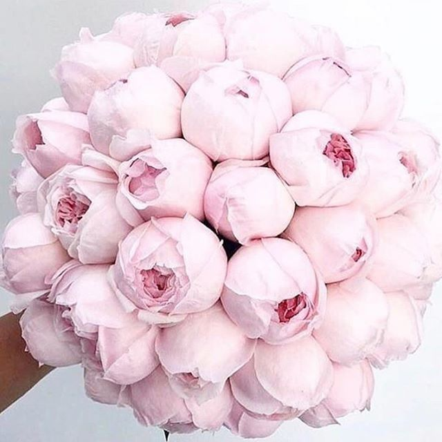 Today is #nationalpinkday! What is more appropriate than pink peonies by @glamou...
