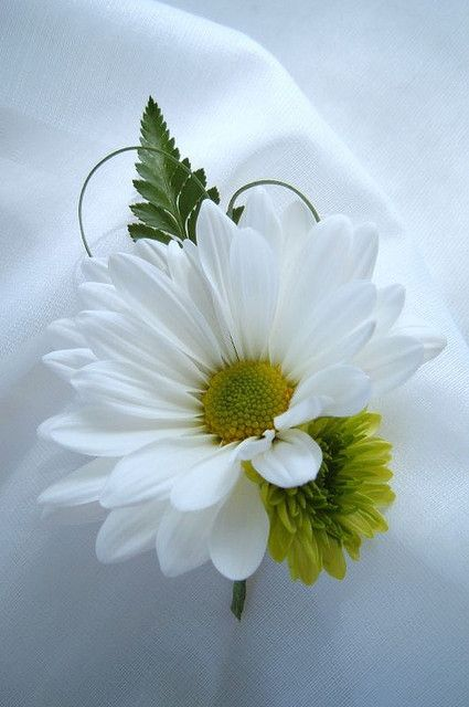 boutonniere daisy white green grass by anderson.florist, via Flickr