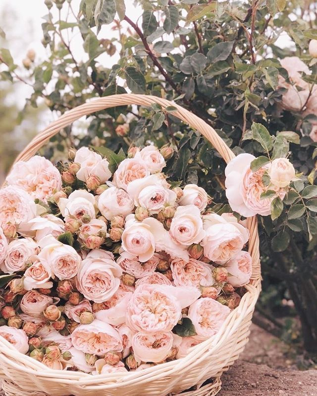 grace is one of my favorite IG accounts to follow (hello daily dose of florals!)...