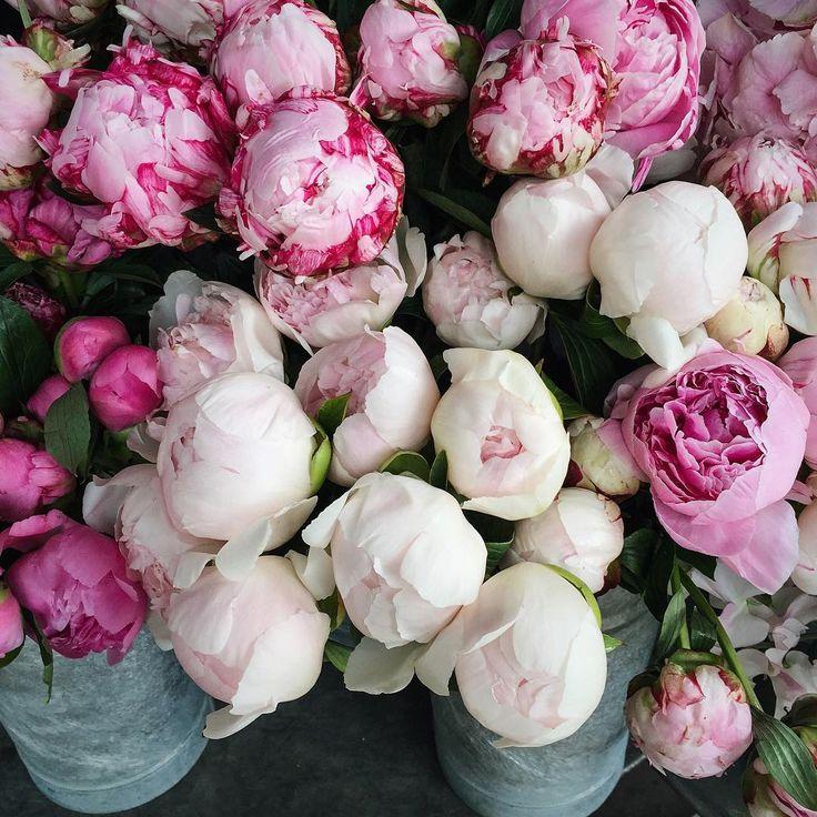 pink peonies ... one of my favorite flowers.