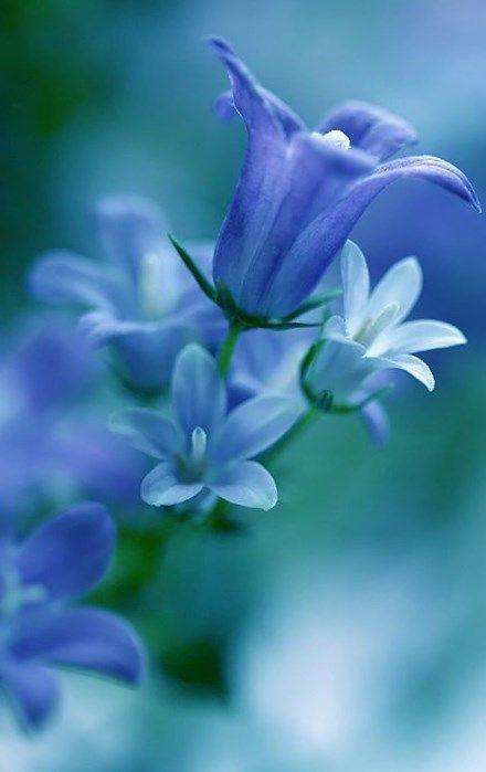 Blue Bell ♥