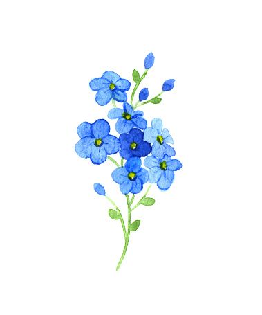 Forget Me Not Clip Art, Vector Images & Illustrations - iStock More