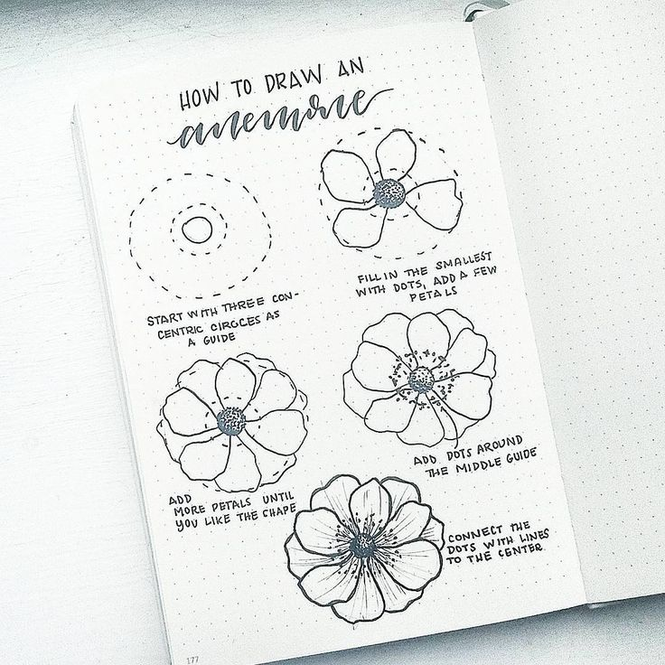How to draw an anemone flower! I'm taking requests for future #FlowerFriday tuto...