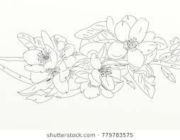 Image result for magnolia flower drawing