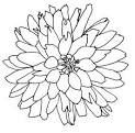 LINE DRAWING FLOWER SEARCH