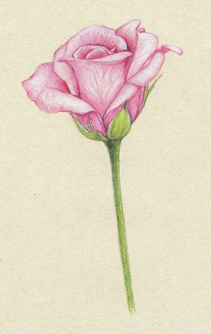 drawings of flowers - Google Search                                             ...