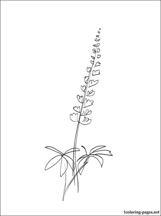 Lupine coloring page for kids | Coloring pages