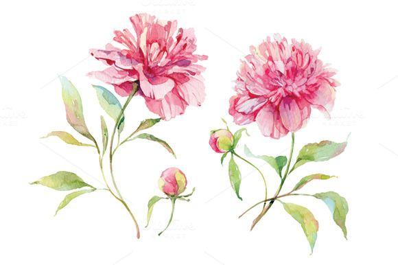 Watercolor pink peonies by Natalia Tyulkina on Creative Market