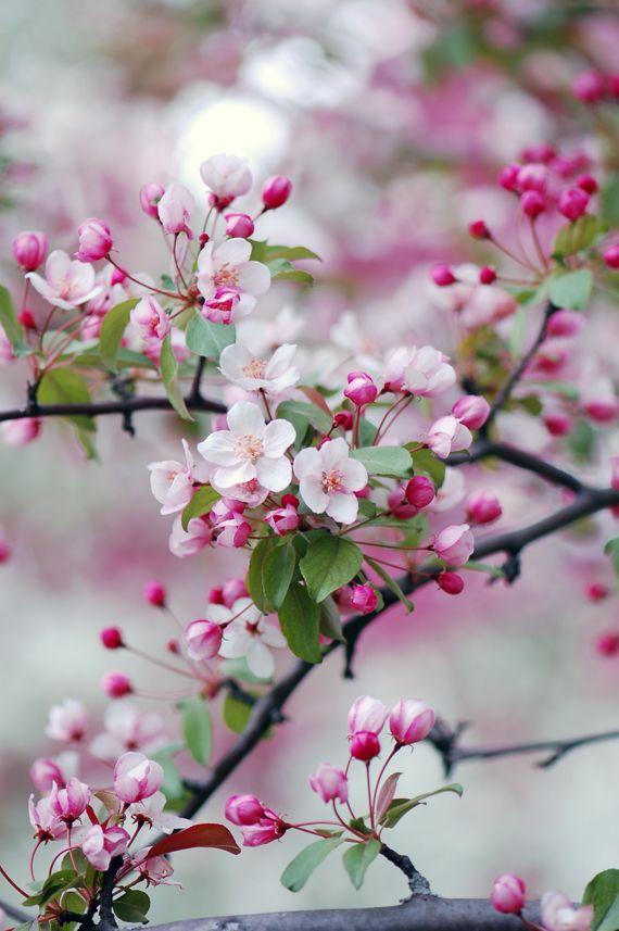 #blossoms