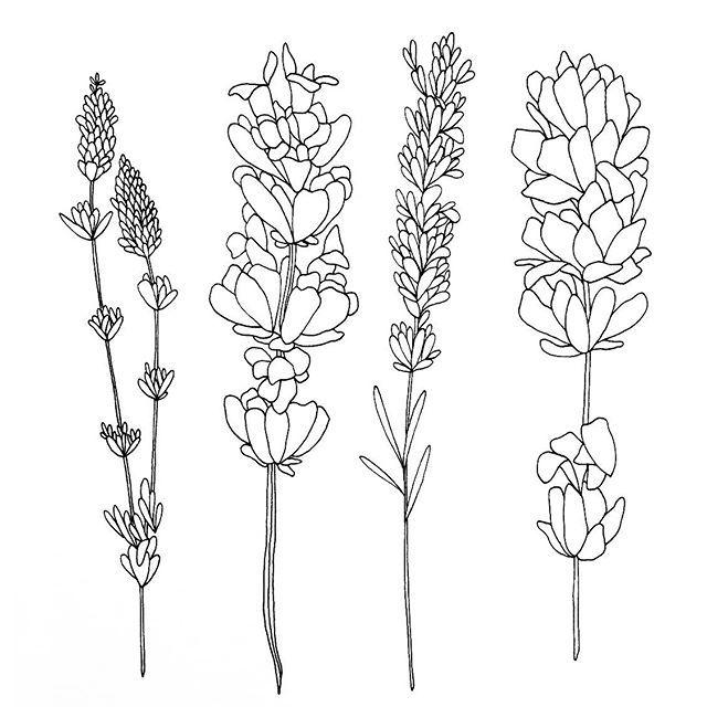 lavender tattoo - Google Search