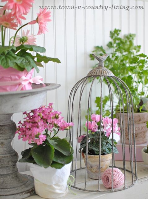 How to Create a Spring Vignette with Potted Plants