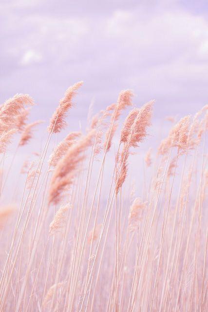 Blush Breeze