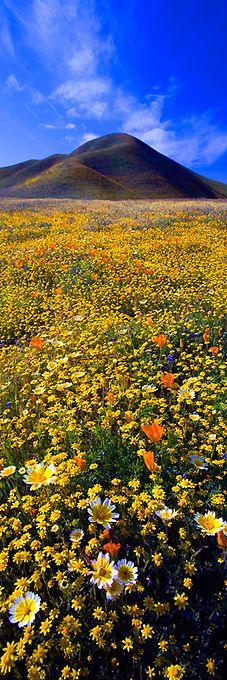~~California Dreaming ~ Carrizo Plain, California by Jeffrey Murray Photography~...