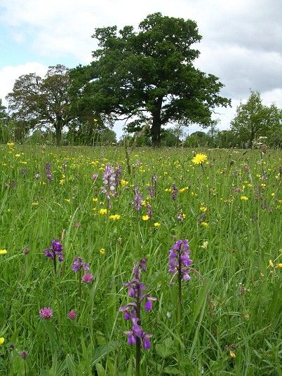 Foster's Green Meadows, Bromsgrove, Worcestershire Foster?s Green and Eades ...
