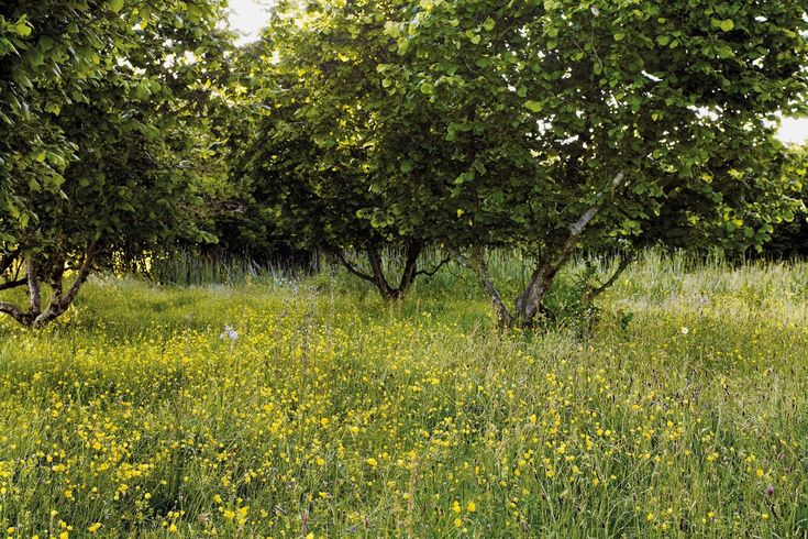 Jinny Blom tips on trees and garden structure