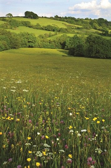 Kingcombe Meadows, Lower Kingcombe, Dorset The Dorset Wildlife Trust says that t...