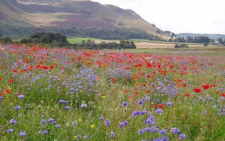 Now is a good time to begin creating a wild flower area. Many wild flower   seed...