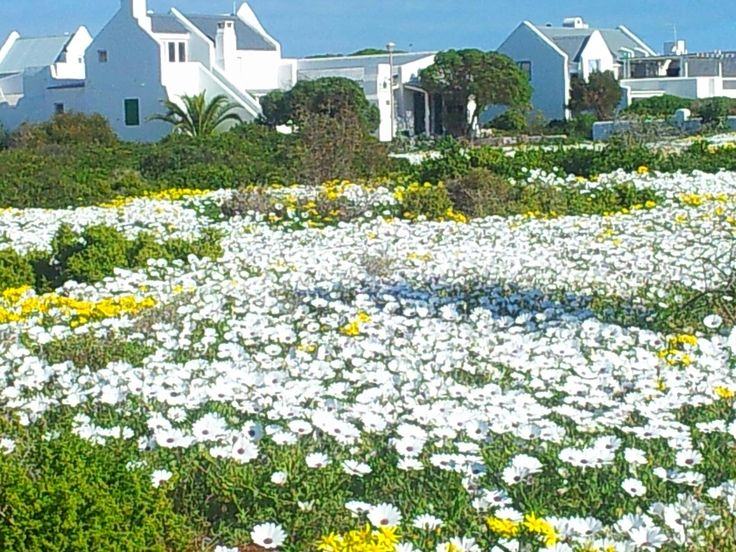 #Paternoster in spring - West Coast - South Africa. #paternoster www.pinterest.c...