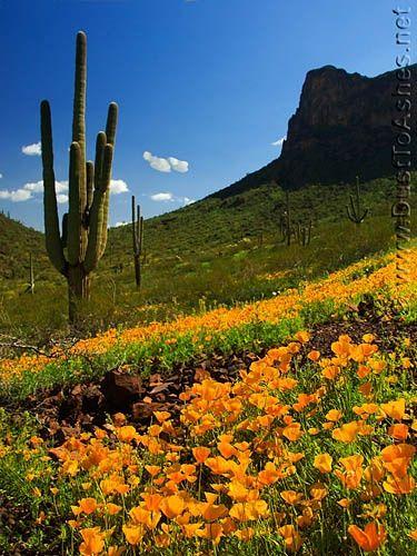 Picacho Peak. Arizona. → For more, please visit me at: www.facebook.com/jolly....