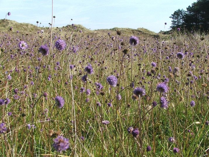 Umbra Nature Reserve, Limavady, Derry The sand dunes and meadows in this Norther...