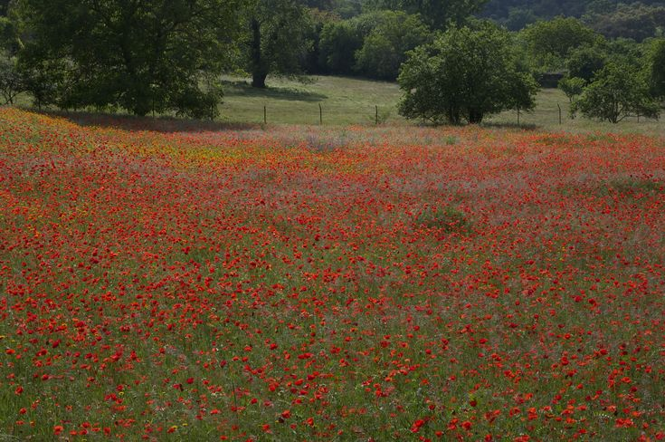 Wild flower meadow in the Sierra de Aracena where there's been an exceptiona...