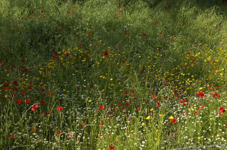 Wild flowers growing abundantly at the end of May in the Sierra de Aracena. Phot...