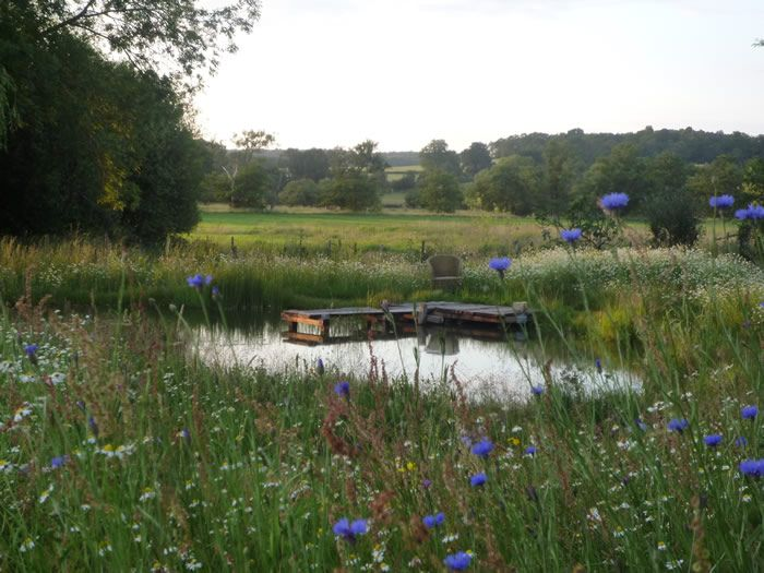 Wildflower Pond - Case study by Claudia De Yong
