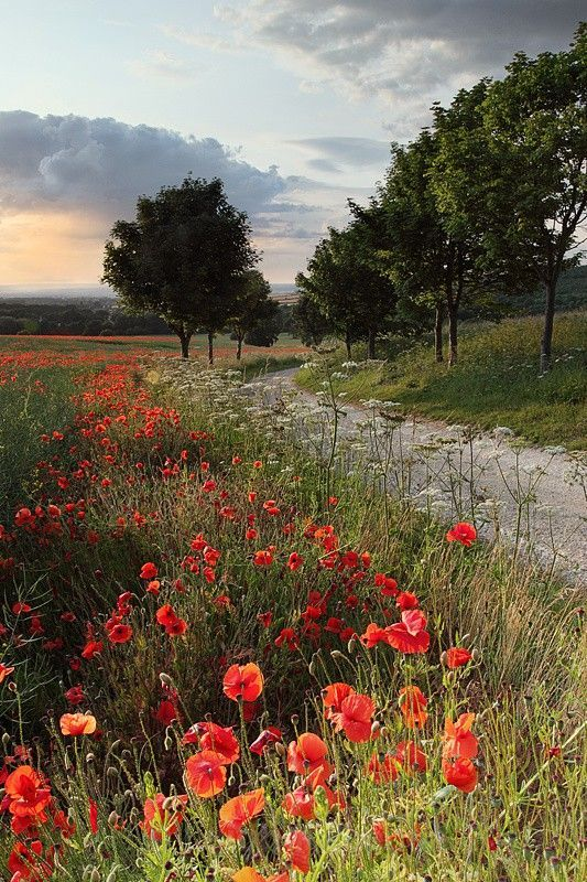 views poppies and paths pics - Google Search