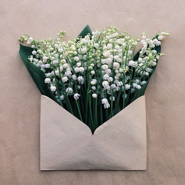 envelope full of flowers #blooms | ANDWHATELSEISTHERE