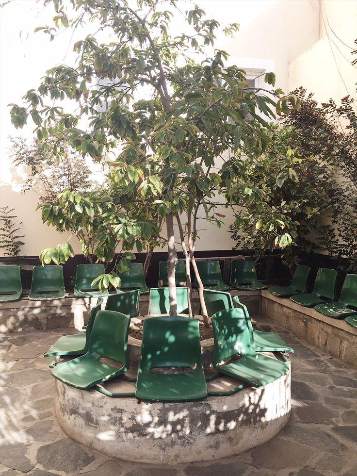 inspiration on Cabo Verde - Kaap Verdie - Sao Vicente - wild plants - tree - hol...