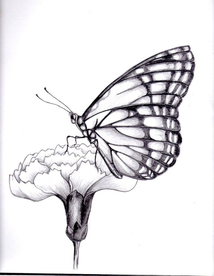 254951d2f1f02 drawings of flowers and butterflies | my drawing of a butterfly. by  ~kittycat727.