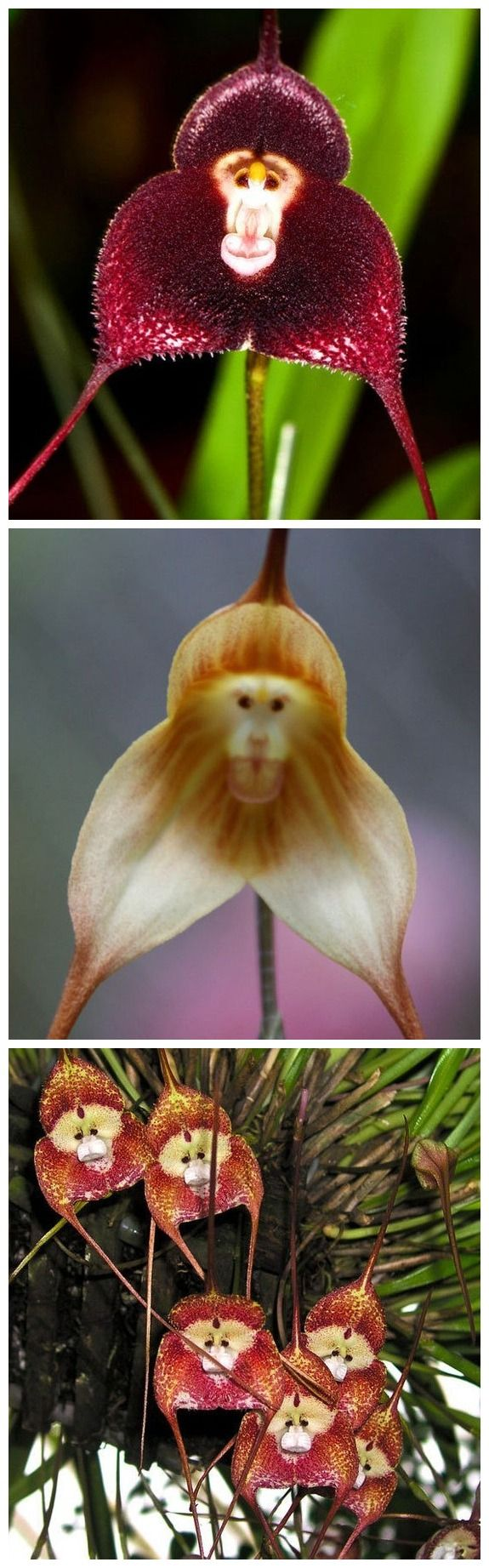 Don't feed the monkey orchids Wandering through the cloud forests of Ecuador a...