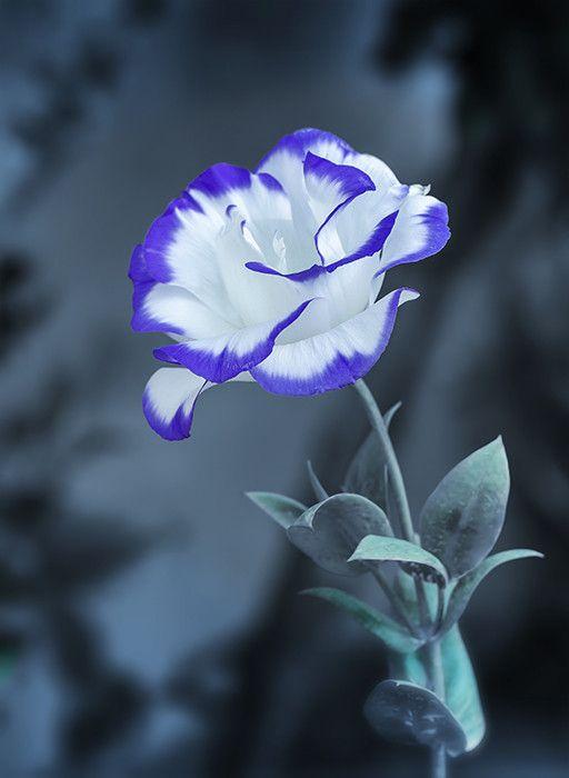 Enzo Davide, 500px #Photography #Flower. Such a vivid colour