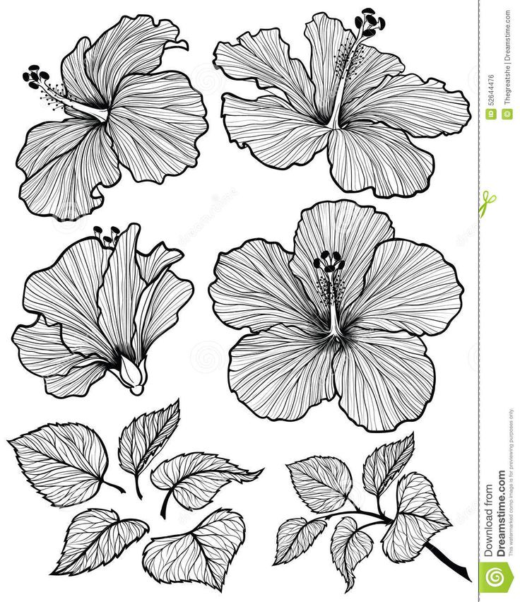 Hibiscus flower graphic head set with leaves and branch with leaves isolated on ...