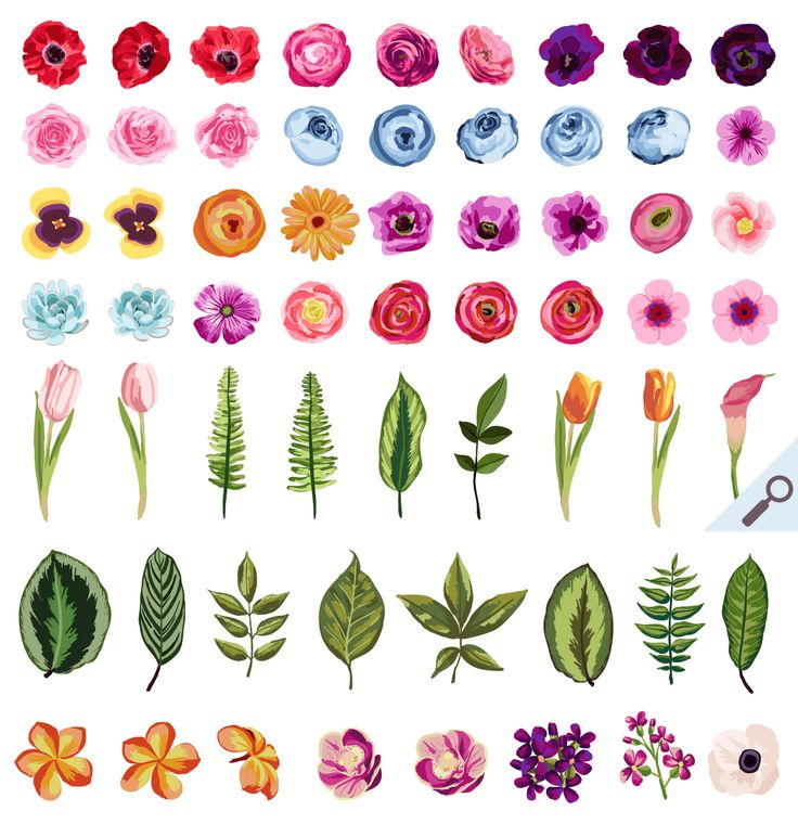 Small Flowers Drawing Images Flowers Healthy