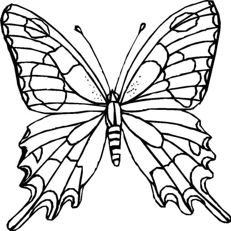 Flowers Drawings Inspiration Difficult Coloring Pages For Adults Rhflowerstn: Difficult Butterfly Coloring Pages At Baymontmadison.com