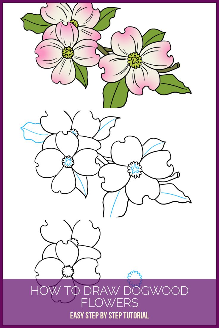 Flowers drawings inspiration learn how to draw dogwood flowers flowers drawings inspiration izmirmasajfo