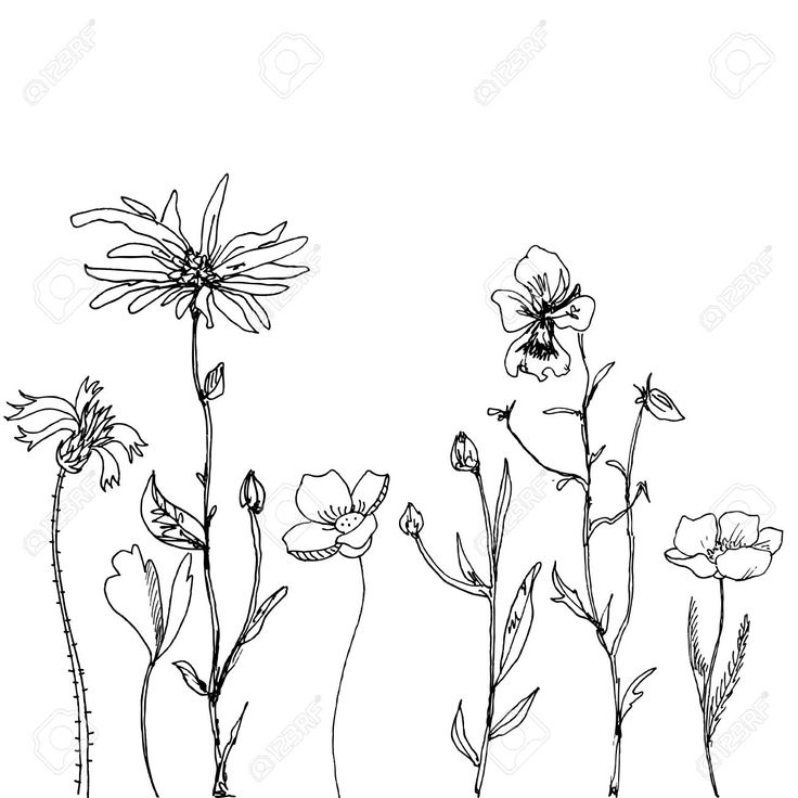 Resultado de imagem para daisy flower drawing