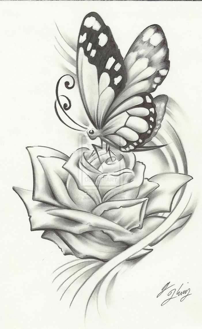 Roses And Butterflies Drawings Wallpapers Ideas