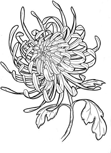 Chrysanthemum Drawing Google Search Diy To Wear Pinterest