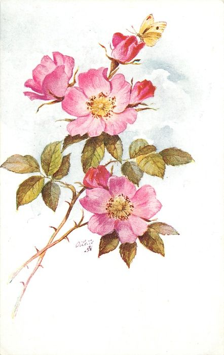 two stems from lower left, three pink dog roses with yellow centres and twobuds,...
